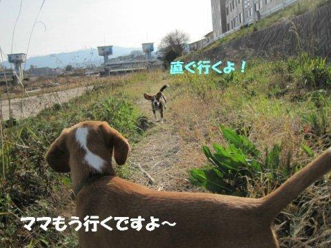 IMG_9478_sh01.jpg