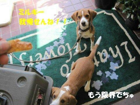 IMG_9623_sh01.jpg