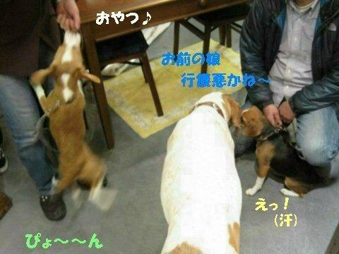 IMG_9676_sh01.jpg