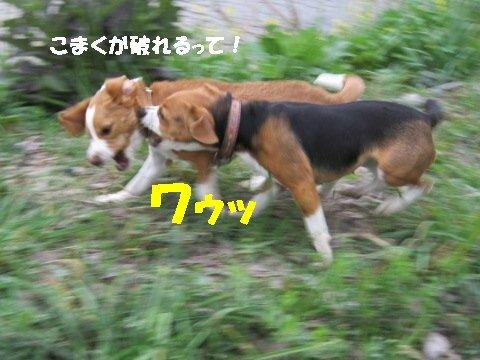 IMG_9766_sh01.jpg