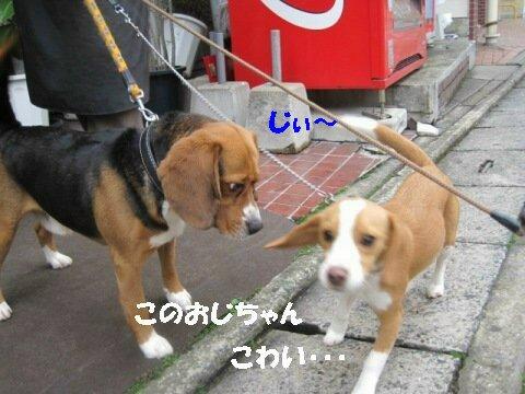 IMG_9943_sh01.jpg