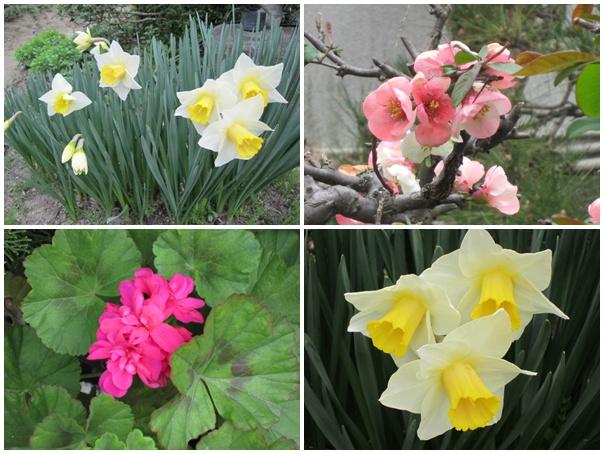 実家の花1
