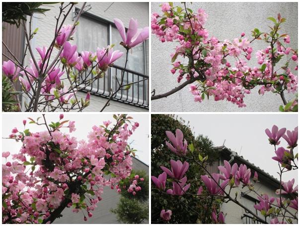 実家の花4