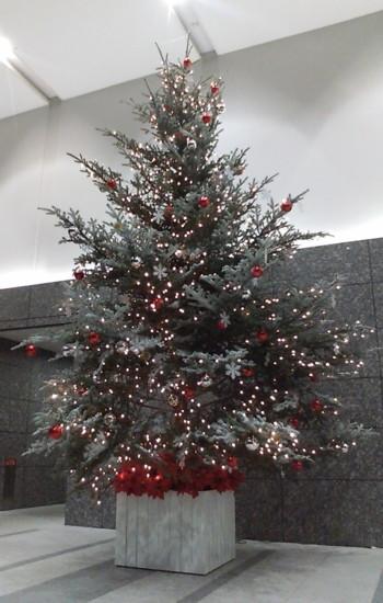 091220 tree