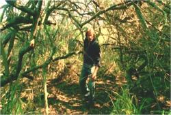 海岸に抜ける森に中にいるソーヤー