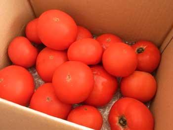 20110724-トマト