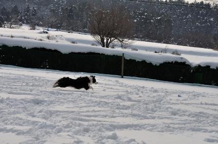 雪の上でも走る走る