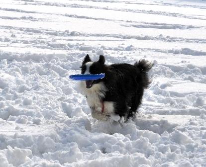 雪の上のフリスビーも楽しい