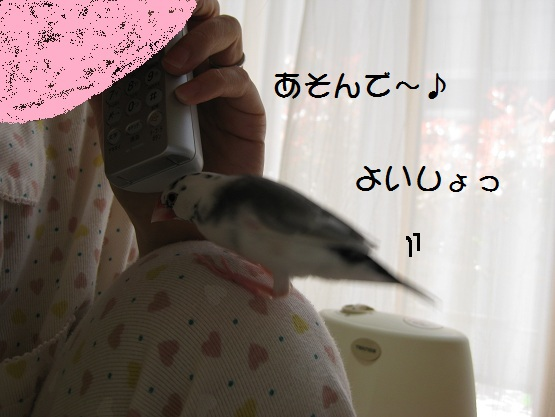 11052006.jpg