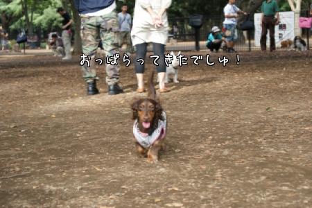 OD1_F.jpg