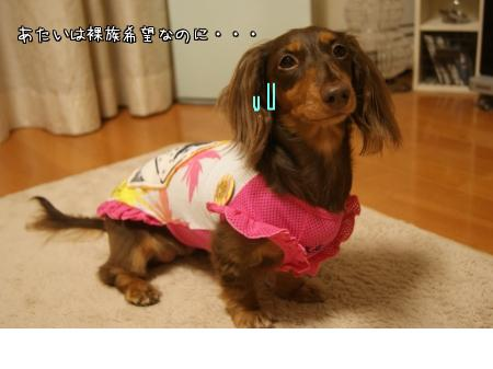 snap_chocola811_2010102214645.jpg