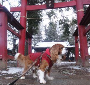 画像 138神社
