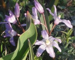 画像 143紫花