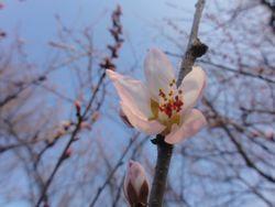 画像 140桜1