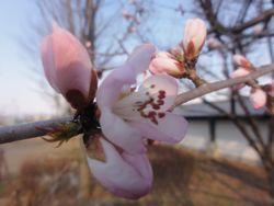 画像 139桜2