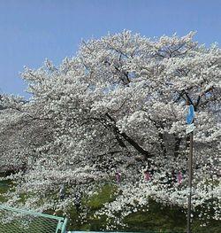 2012042115280000上田城跡