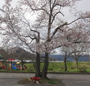 画像 140公園1