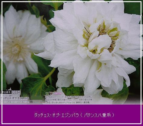 P1180155_エジンバラ