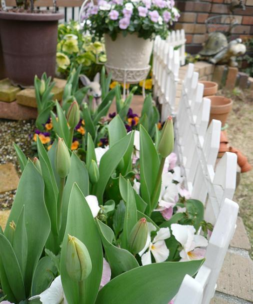 P1190636_メイン花壇のチュ~リップ2