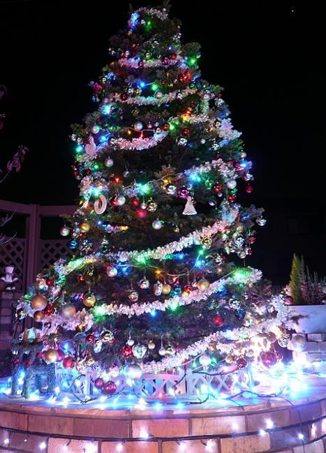P1160877_tree2.jpg