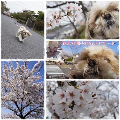 2012花見