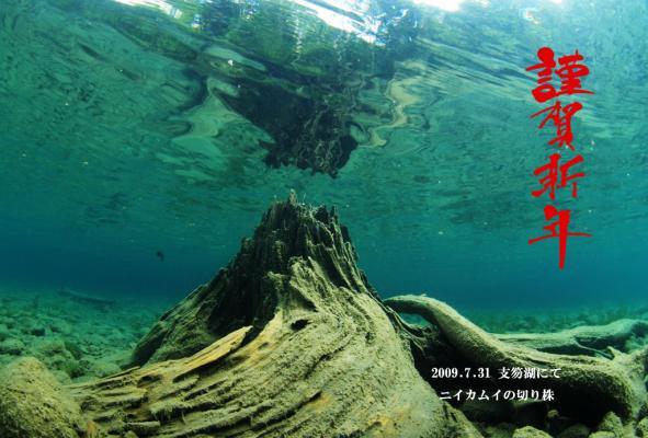 切り株(支笏湖)