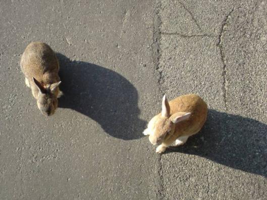 12月20日 ウサギ