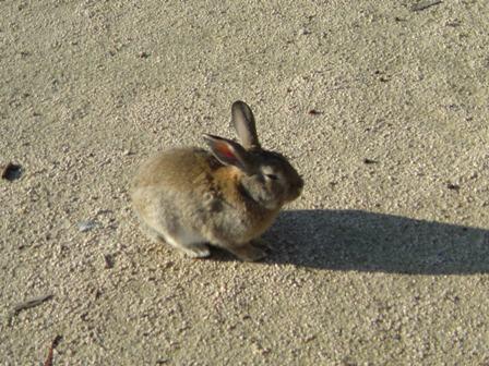 12月22日 ウサギ