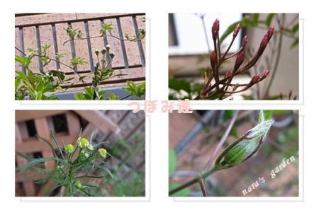 110402naras-garden2.jpg