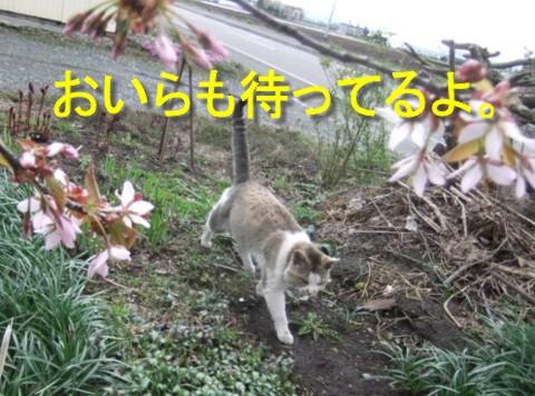 2011.05.14コムクドリ 081