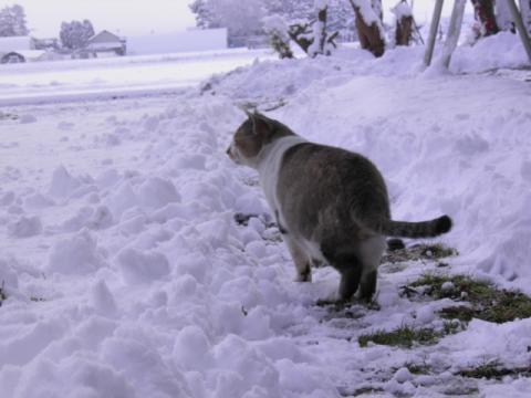 2011.11.17雪 031