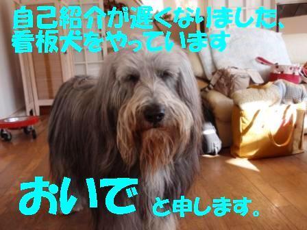 ③看板犬№1