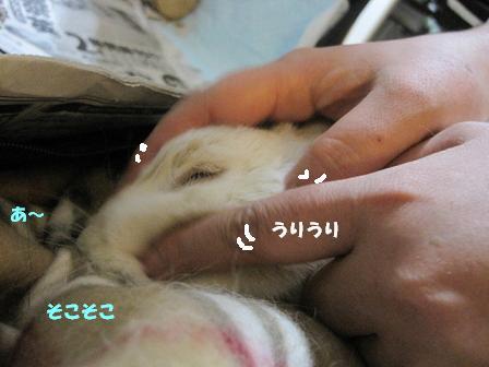 IMG_2193_mini.jpg
