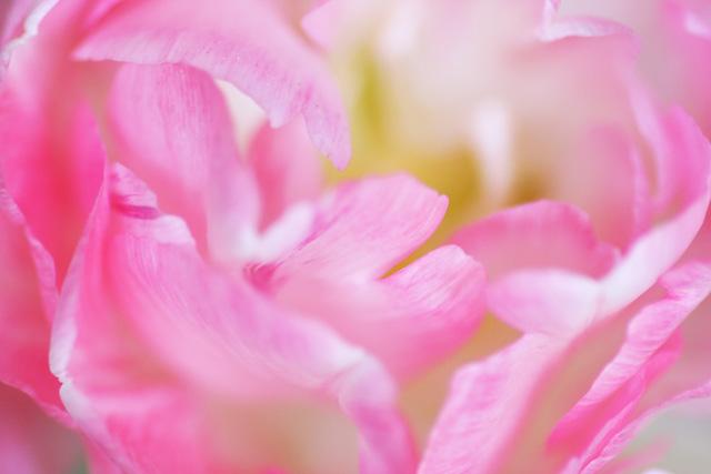 spring flower No.5