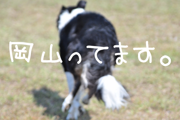 DSC_6509_2.jpg