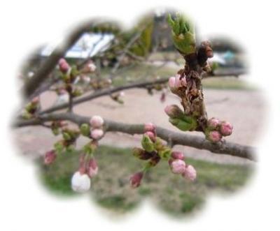 今日の桜ちゃん!!