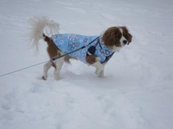 今日も、雪!!