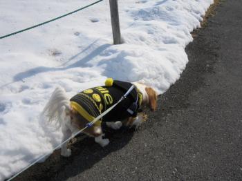 雪が解けないね~!!
