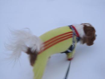 またもや、雪!!