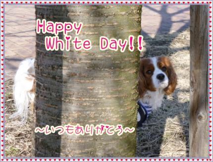 ホワイトディのメッセージ!!