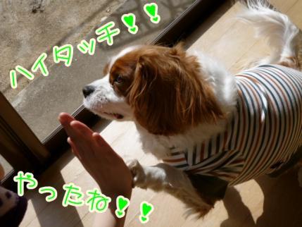 おめでとう!!