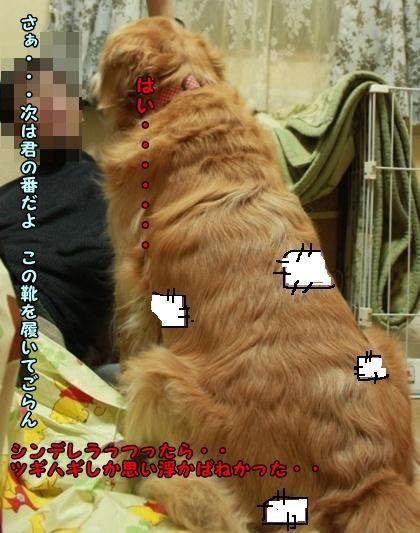 IMG_1650_20091126223018.jpg