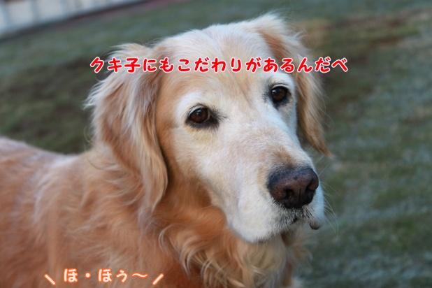 IMG_2070_20091202010825.jpg