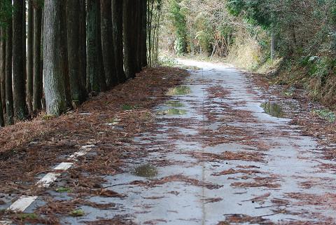 嵐の後の道