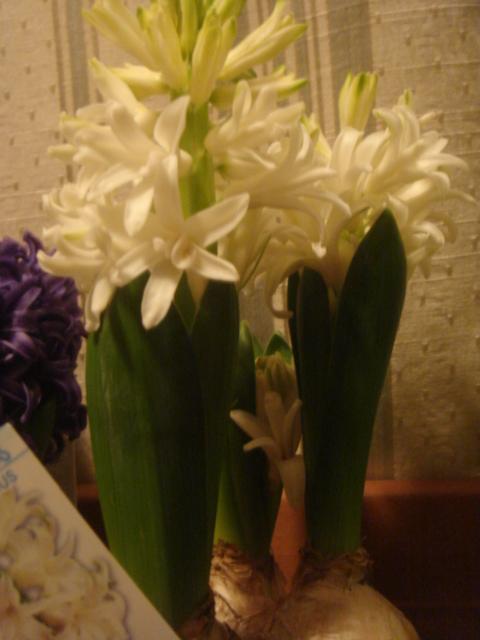 sachiko maeda candle etc 012