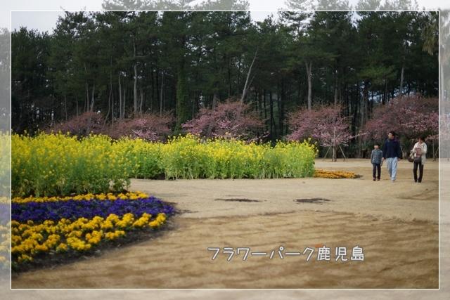 春ゆえ02