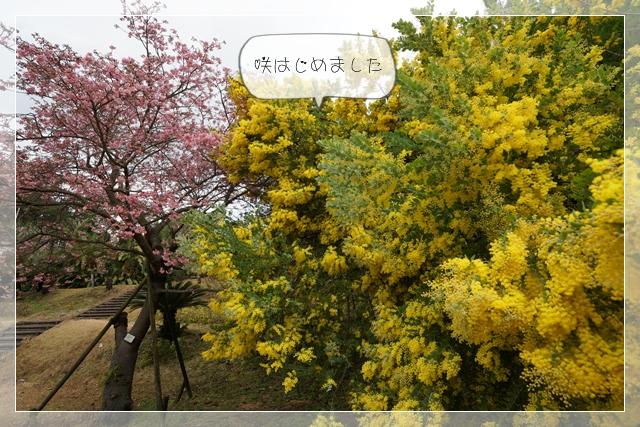 春ゆえ03
