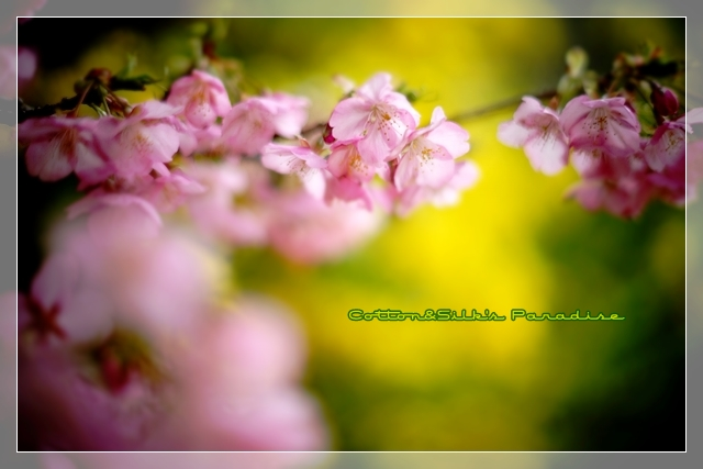 春ゆえ04