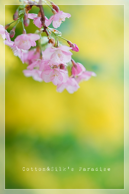 春ゆえ07