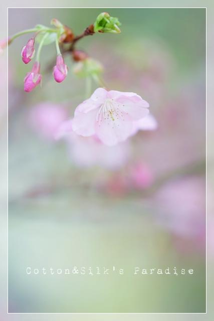 春ゆえ09